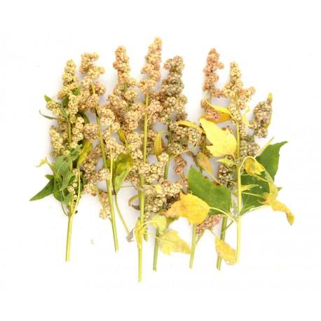 quinoa-mint-vanilla.jpg